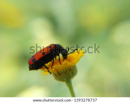 Insect photography in nature Beach - desert - mountains #1393278737