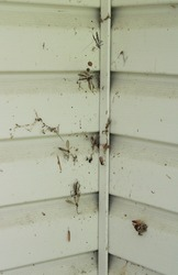 Insect Remains in Old Spider Webs