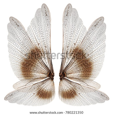 Insect wings isolated on white background #780221350