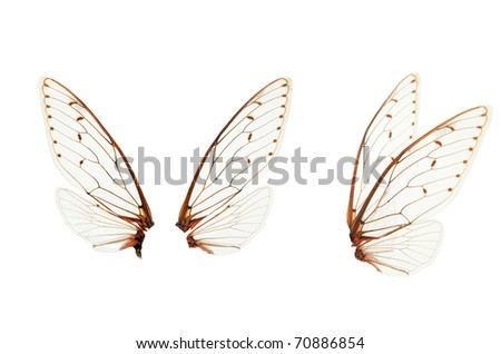 insect wings reports Wing,