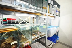 Insectarium in the zoo laboratory. Terrarium shelves, special equipment close-up. Research, education, botany, biology, zoology, entomology, herpetology, carcinology, environmental protection theme