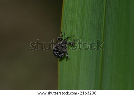 insecto Foto stock ©