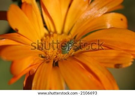 insecto macro Foto stock ©