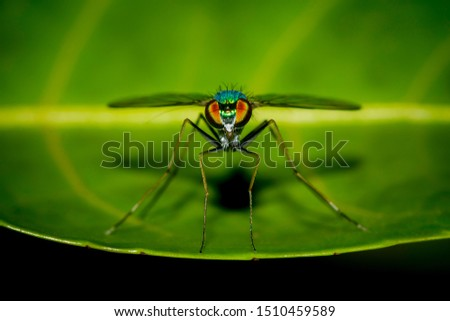 Insects and macro magnification from macro photography
