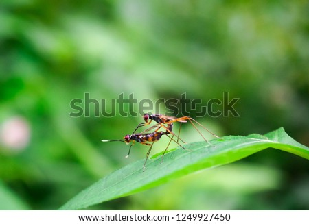 Insects are breeding. #1249927450