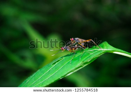 Insects are breeding. #1255784518
