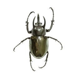 Insects, beetles,Giant rhinoceros beetle (Chalcosoma caucasus) Isolated on white background