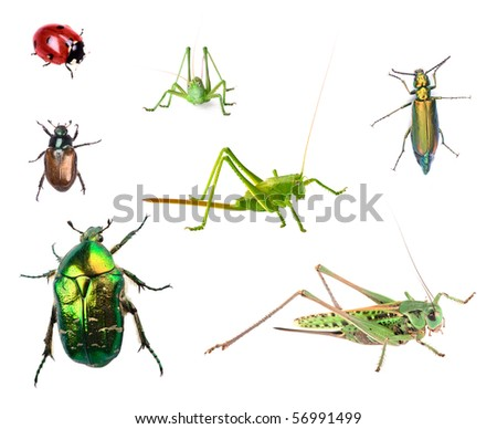 Insects collection isolated on white background
