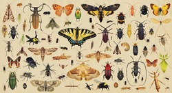 Insects collection. Old paper textured background