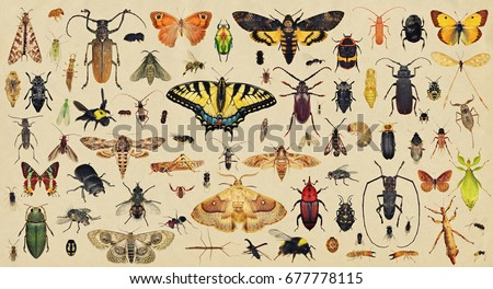 Insects collection. Old paper textured background #677778115