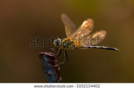 Insects , Flies Macro Pic