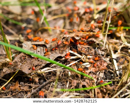 insects in nature, insect colonies #1428762125