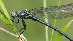 insects in the wild, wild dragonfly photos