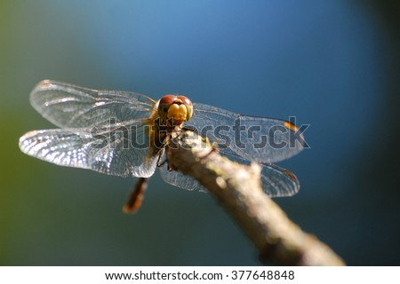 Stock Photo Insects in village. Insects. Dragonfly. Summer photo