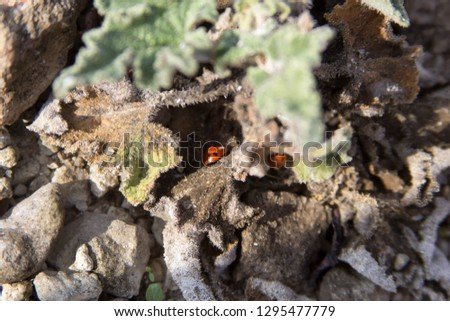 insects ladybugs on earth