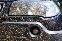 insects, midges and gnats dead and crushed on the windows of the car lights