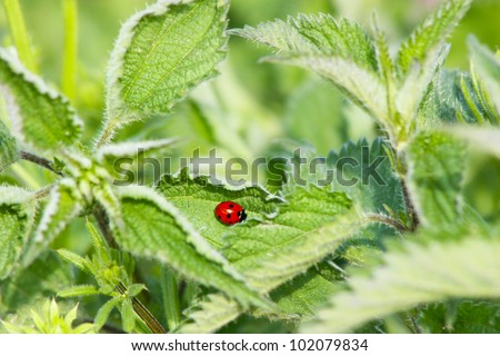 Insects on a Sheet of