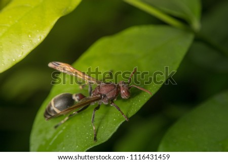 Insects on biodiesel, wood
