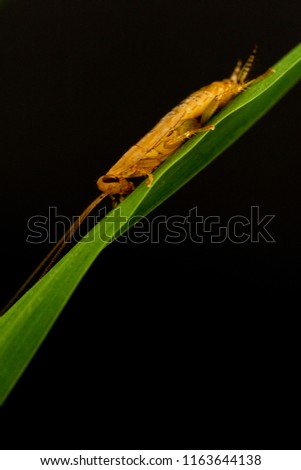 insects on grass leaves with black background #1163644138