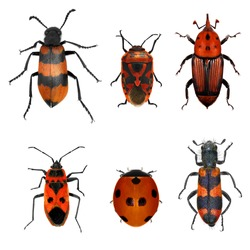 Insects red collection (beetles and bugs). Isolated on a white background