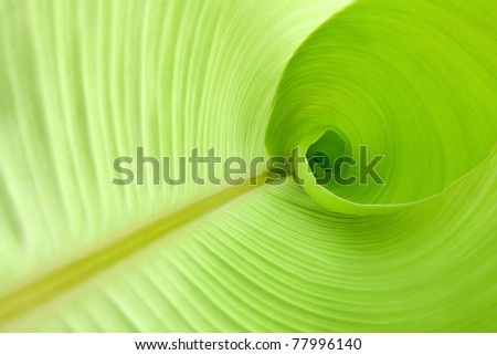 Inside a banana leaf
