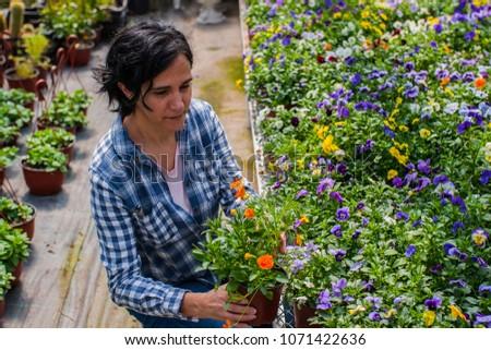 Inside a flower nursery, worker inspecting the flowers #1071422636