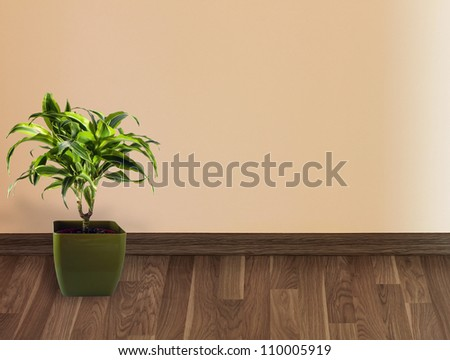 Inside interior of wall with palm tree on floor