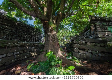 Inside Nan Madol central Nandauwas part: walls, and moat made of large basalt slabs, overgrown ruins in the jungle, Pohnpei, Micronesia, Oceania