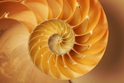 Inside of Nautilus Shell Showing Spiral