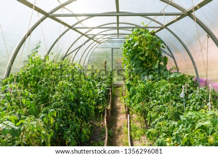 Inside plastic covered horticulture greenhouse  #1356296081