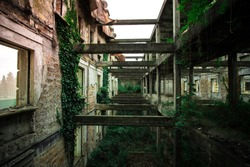 Inside ruined building overgrown by plants. Nature and abandoned architecture, green post-apocalyptic concept