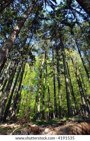 Inside the green forest - summer detail