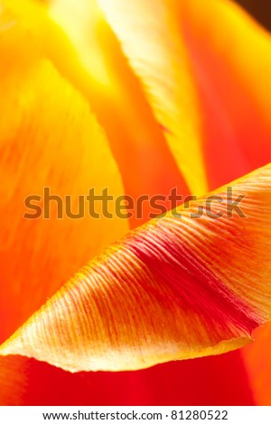 Inside the Tulip