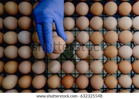 inspecting industrial produced eggs in factory