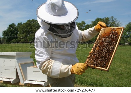 inspecting the hive frame