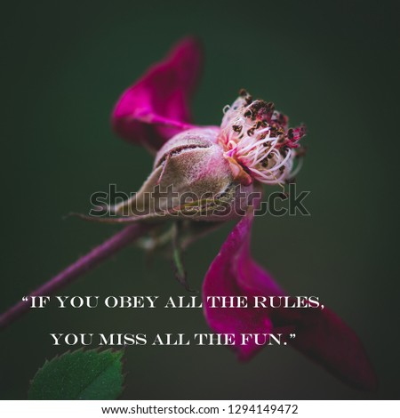 """Inspirational and motivational quotes """"If you obey all the rules, you miss all the fun."""""""