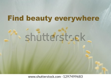 Free Photos Inspirational Typographic Quote Beauty Is Everywhere