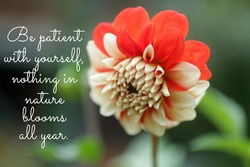 Inspirational motivational quote - Be patient with yourself, nothing in nature blooms all year. Words of wisdom concept with red dahlia flower in garden.