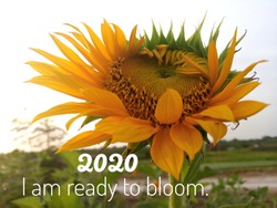Inspirational motivational quote - 2020 i am ready to bloom. With background of fresh & beautiful sunflower blossom in the garden. Words of wisdom about life process concept with nature.