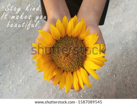 Inspirational motivational quote - Stay kind. It makes you beautiful. With background of sunflower blossom in open hands. Kindness words of wisdom concept with young girl holding yellow flower in hand