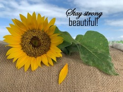 Inspirational motivational quote - Stay strong beautiful. With a fragile sunflower, green leaf, falling petal and the blue sky background. Strength and fragility concept.