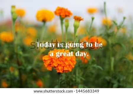 Inspirational motivational quote - Today is going to be a great day. With blurry image of beautiful marigold flowers blossom in the garden background.