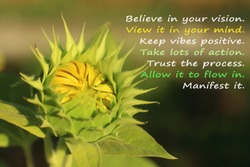 Inspirational motivational quote with nature- Believe in your vision, keep vibes positive, take lots of action, trust the process, allow it to flow, manifest it. With young green sunflower blooming.