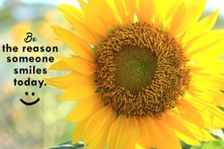Inspirational quote - Be the reason someone smiles today. With closeup of beautiful sunflower blossom in the garden background and happy smile emoticon. Motivational words with nature flower concept.