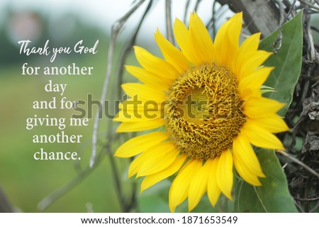 Inspirational quote - Thank you God for another day and for giving me another chance. With beautiful yellow sunflower blossom on the field background. Gratitude gratefulness motivational words concept Сток-фото ©
