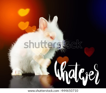 Inspirational Quote.Whatever. Wallpaper Poster Typography Design.White Rabbit on a black background #444650710