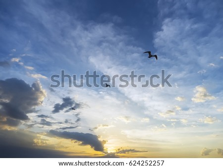 Inspirational sunrise behind three birds soaring loftily through the sky, achievement and success concept #624252257