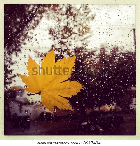 Instagram style image of a leaf against a widow during a rain storm