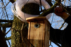 installation and inspection of birdhouses on trees for spring nesting. A man in an overall fitter takes an ornithologist up a ladder and attaches a nesting box for titmouse.