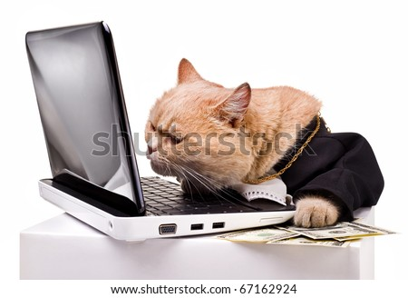 intelligent cat for the laptop.Animal in the academic robes on a white background.financial success.New Year.